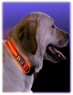 CLOSE OUT - Night Dawg Collar | Size: Small
